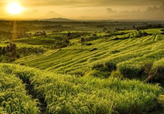 Traveller's Guide: 14 Things You Need to Know Before Travelling to Bali