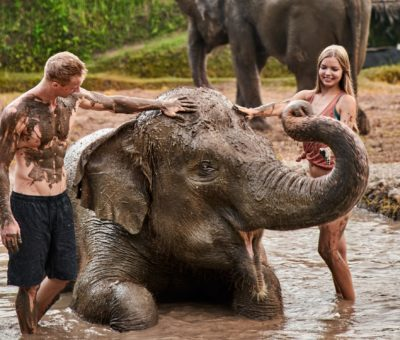 Fun Mud Experience with Elephant at Bali Zoo