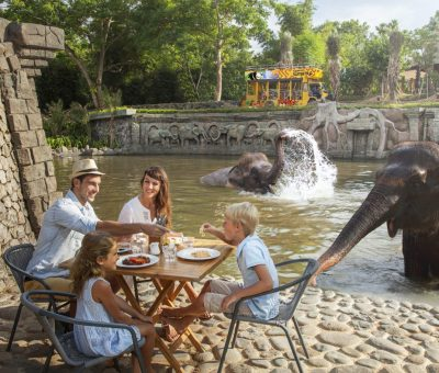 Bali Zoo: Fun Family Day with Elephants and Orangutans
