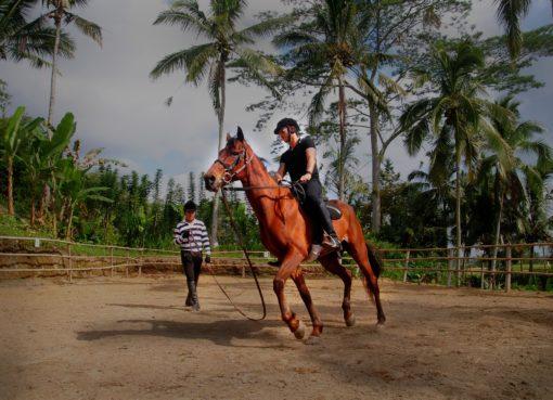 Ubud Horse Stables - insight bali