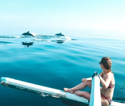 Go North with the Dolphins at Lovina