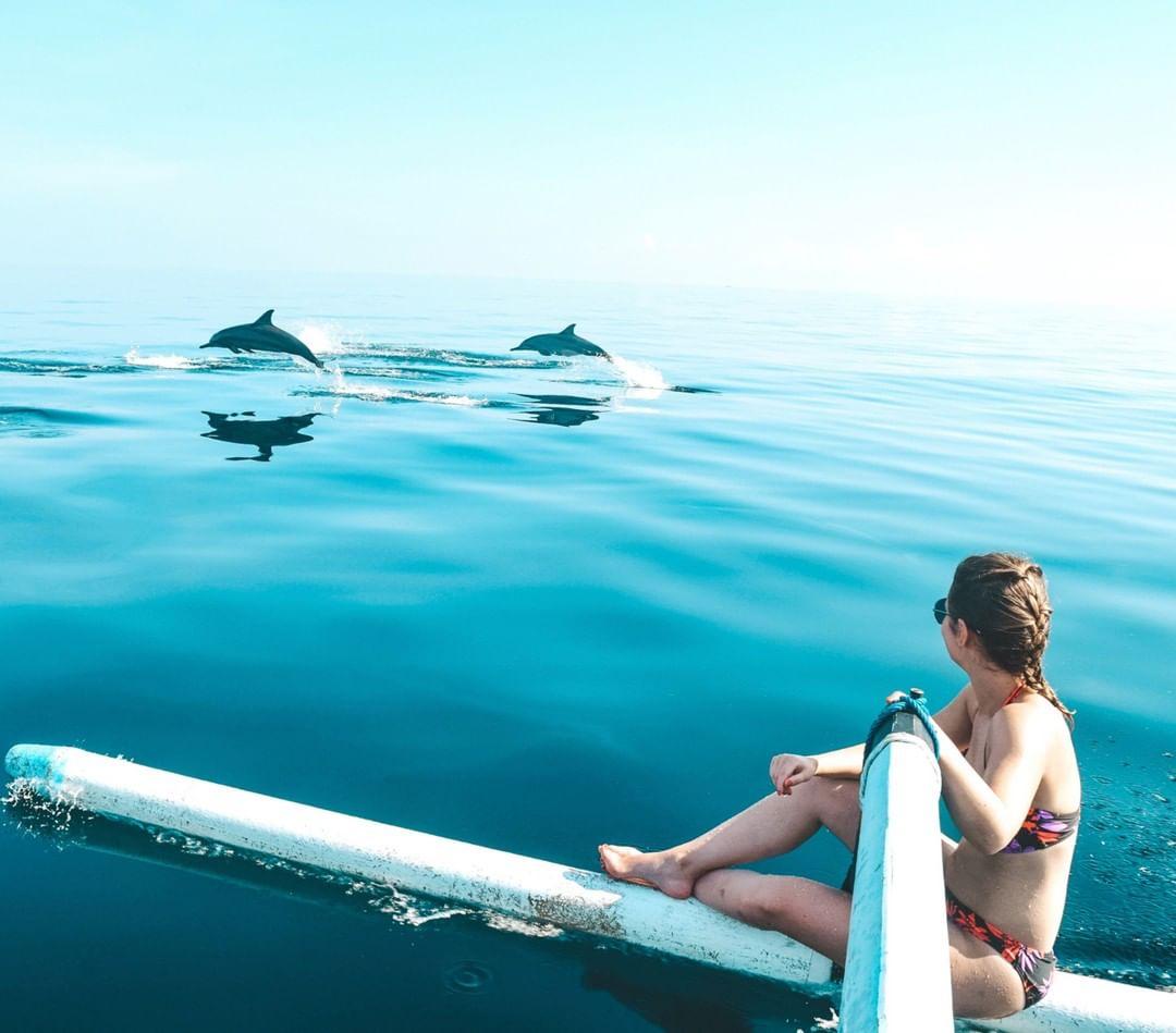 lovina dolphin - insight bali