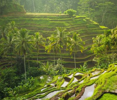 Tegallalang Rice Terrace: The Enchanting Beauty of Motherland